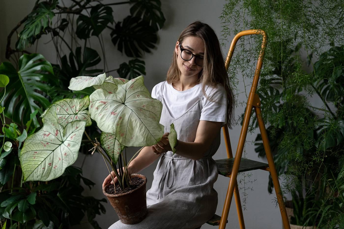 woman-gardener-grey-linen-dress-holding-caladium-houseplant-with-large-white-leaves-green-veins-clay-pot-sitting-stepladder-her-home-love-plants-indoor-gardening.jpg